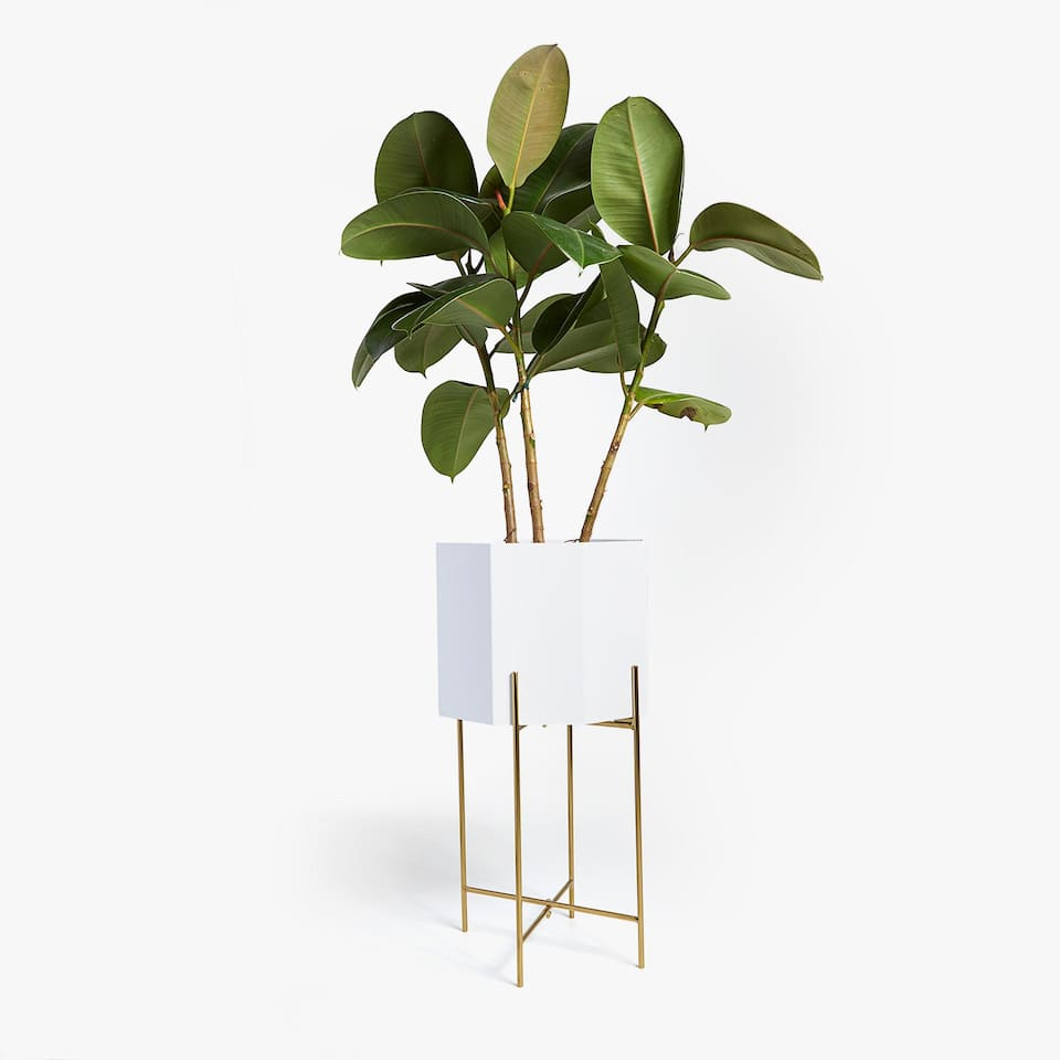 LACQUERED PLANTER WITH GOLDEN BASE